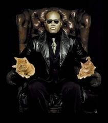 Morpheus-holding-cats.jpg